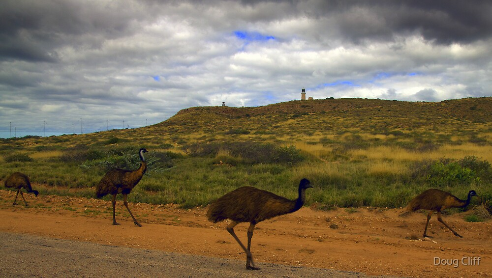 Emu's on the side of the road by Doug Cliff