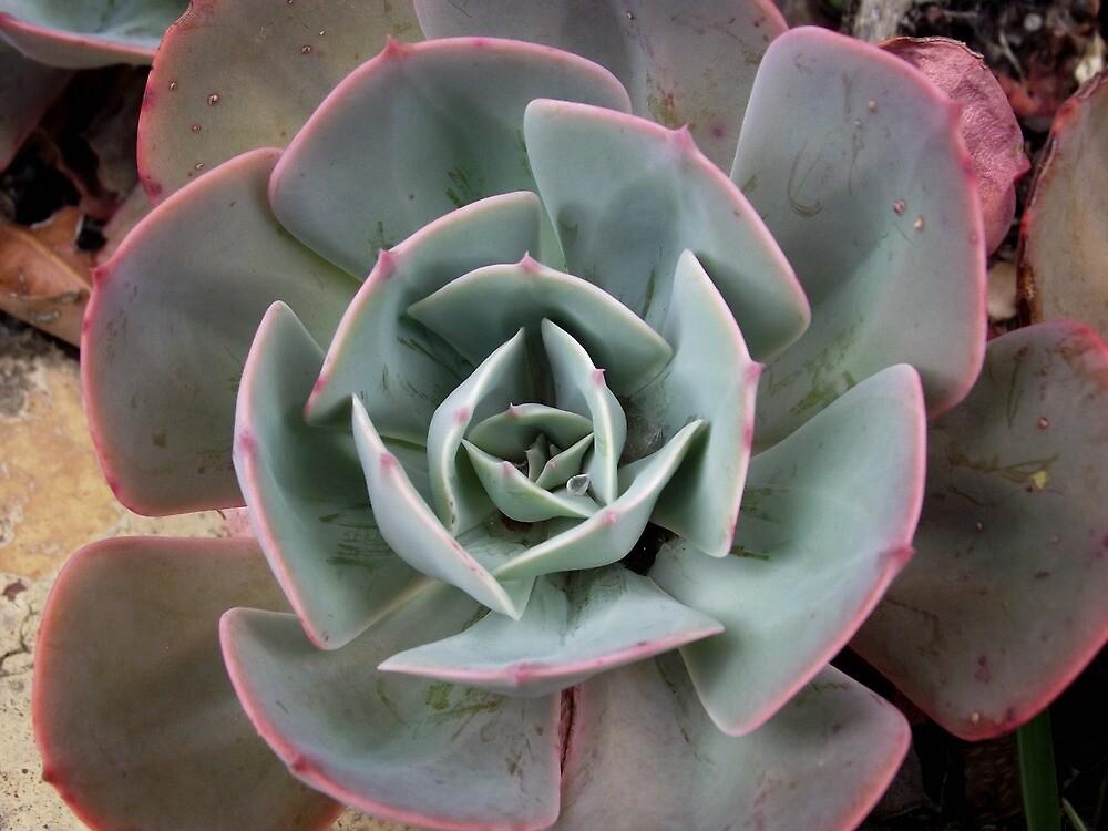 Succulent Plant by SophiaDeLuna