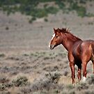 Cherry Creek Mustang by Owed To Nature