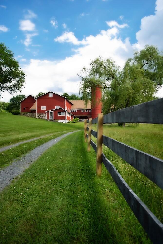 Along the Fence by Sally Kady