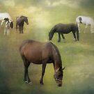 Field of Dreams by Carol Bleasdale