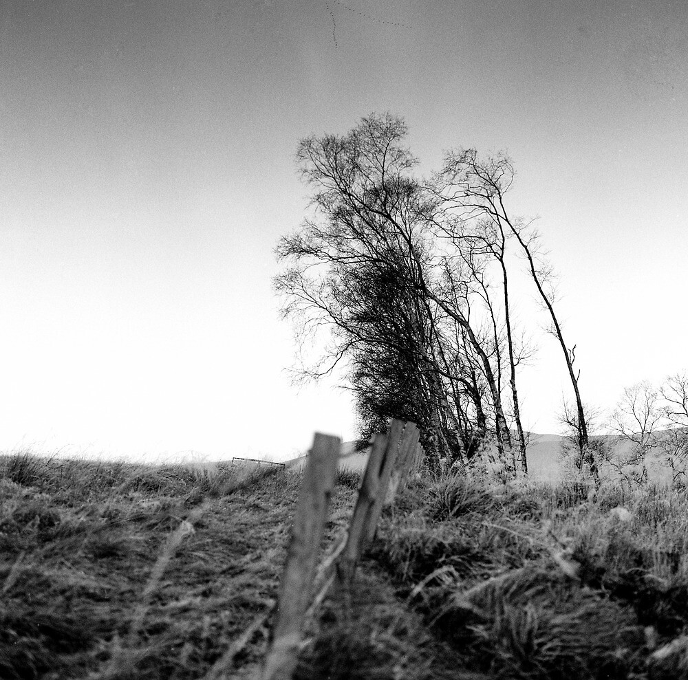 Fence and Trees. Southern Upland Way, Near Yair, Scottish Borders by Iain MacLean