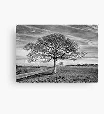 Skeletal Tree Canvas Print