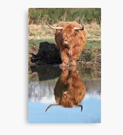 Highland Cattle Reflection Canvas Print