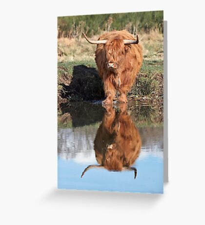 Highland Cattle Reflection Greeting Card