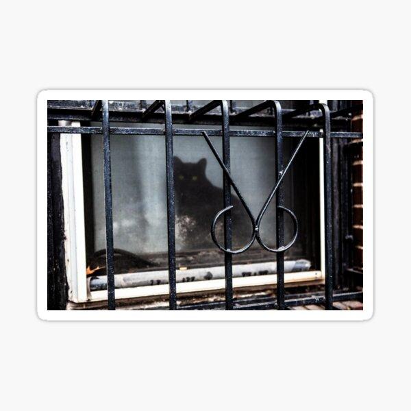 Cat under Lockdown in New York City Sticker