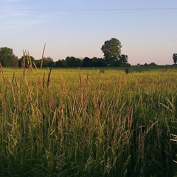 The Wheat Field by TMcVey