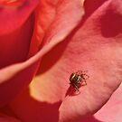 Itsy Bitsy Spider... by Benjamin Curtis