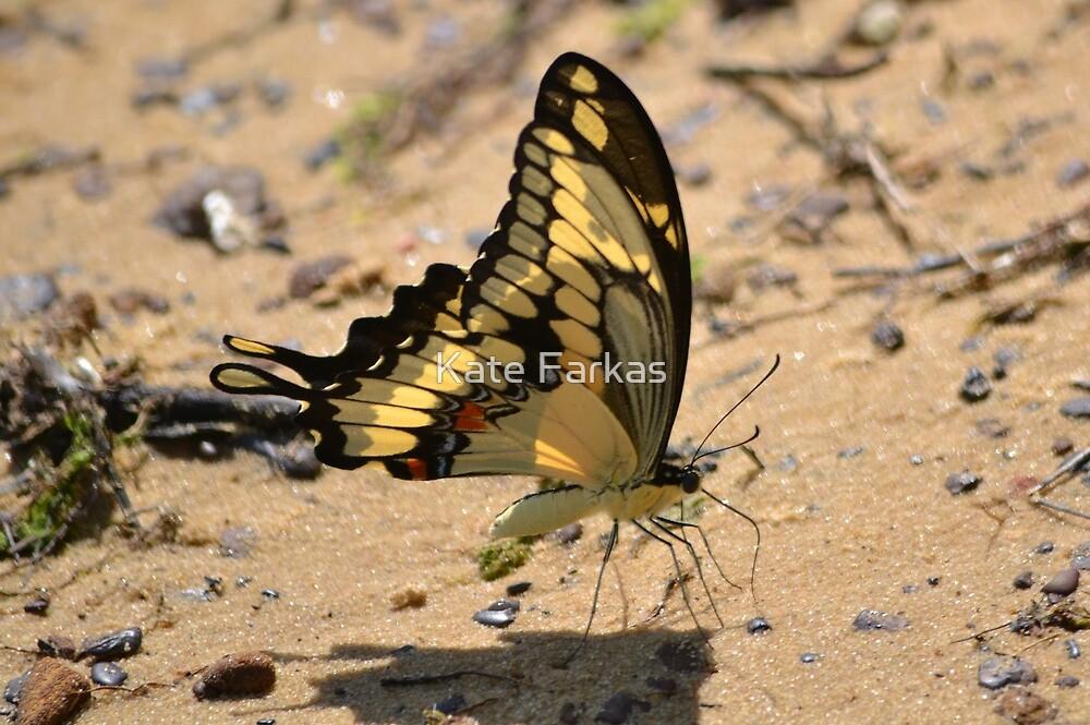 Swallowtail on the lake by Kate Farkas