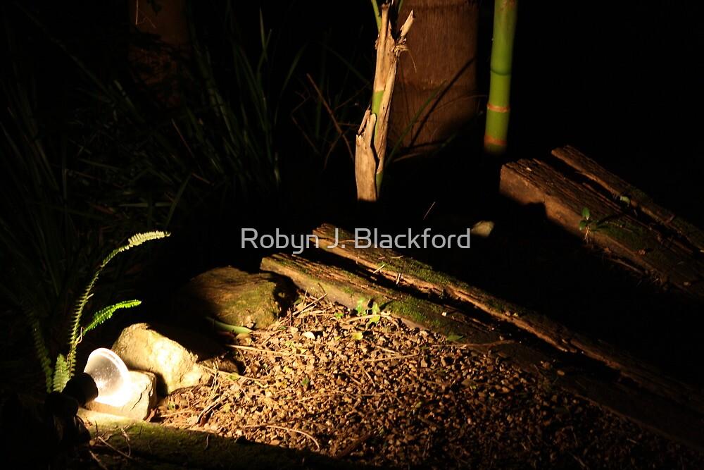 Bush Garden Steps at Night by aussiebushstick