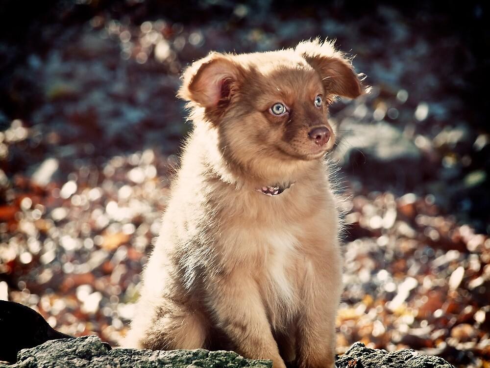 Beautiful Dog by Raquel Perryman