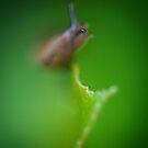 They Eye of a Slug by toby snelgrove  IPA