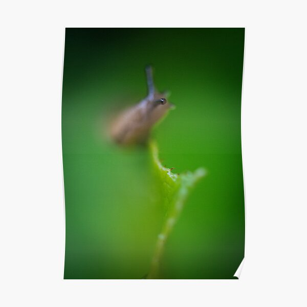 They Eye of a Slug Poster