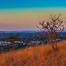 Lonely Tree by Rudi Venter