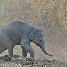 Keeping up with the herd, elephant calf  India by vawtjwphoto