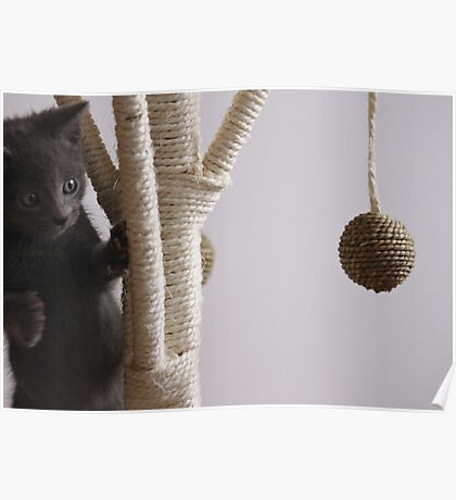 Russian Blue Poster