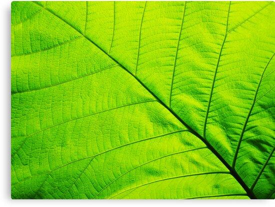 Macro Green Leaf Wrapped Canvas Canvas Print by Van Nhan Ngo