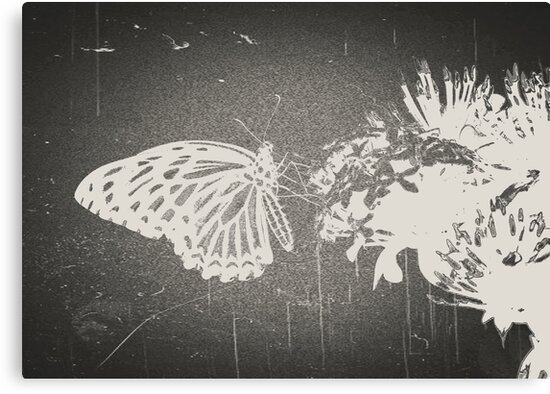 Vintage Butterfly by Nhan Ngo
