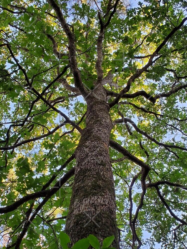 Oak tree Classy Camo by dreamie09