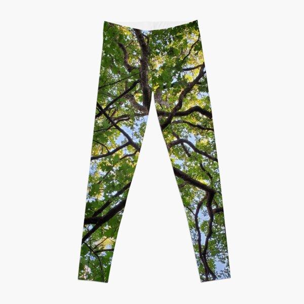 Oak tree Classy Camo Leggings