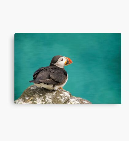 Puffin on cliff Canvas Print