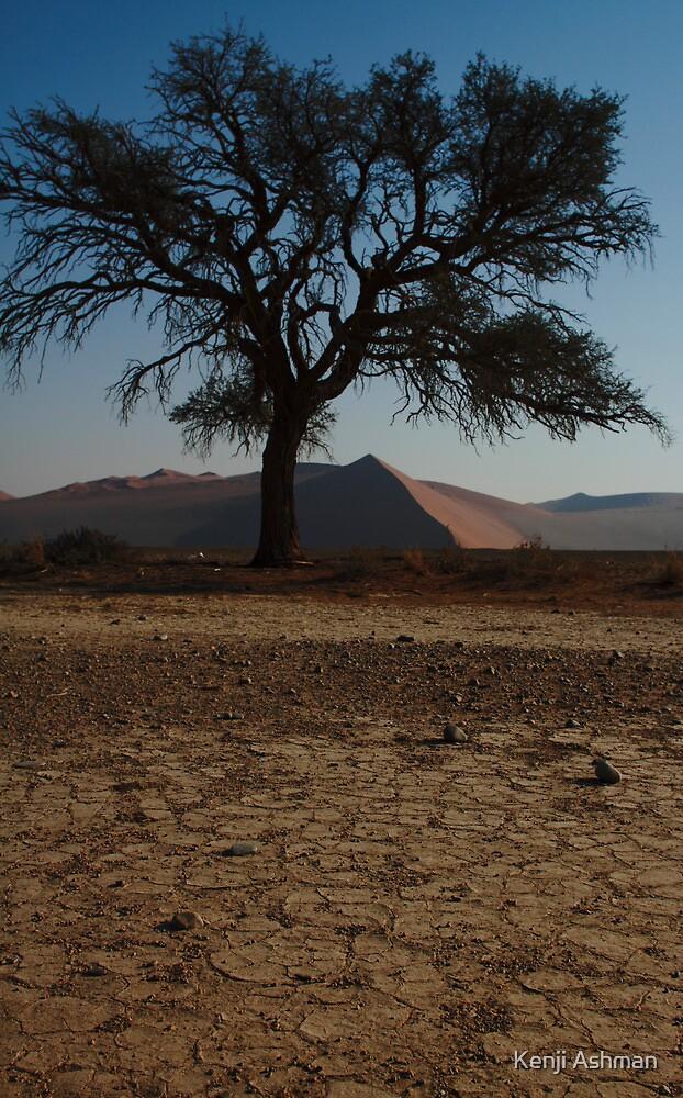 Desert Tree by Kenji Ashman