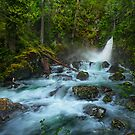 Flowing in the Forest by Thomas Dawson