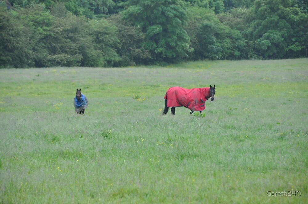Horses by Gareth240