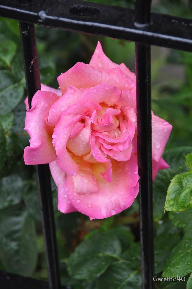 Flower by Gareth240
