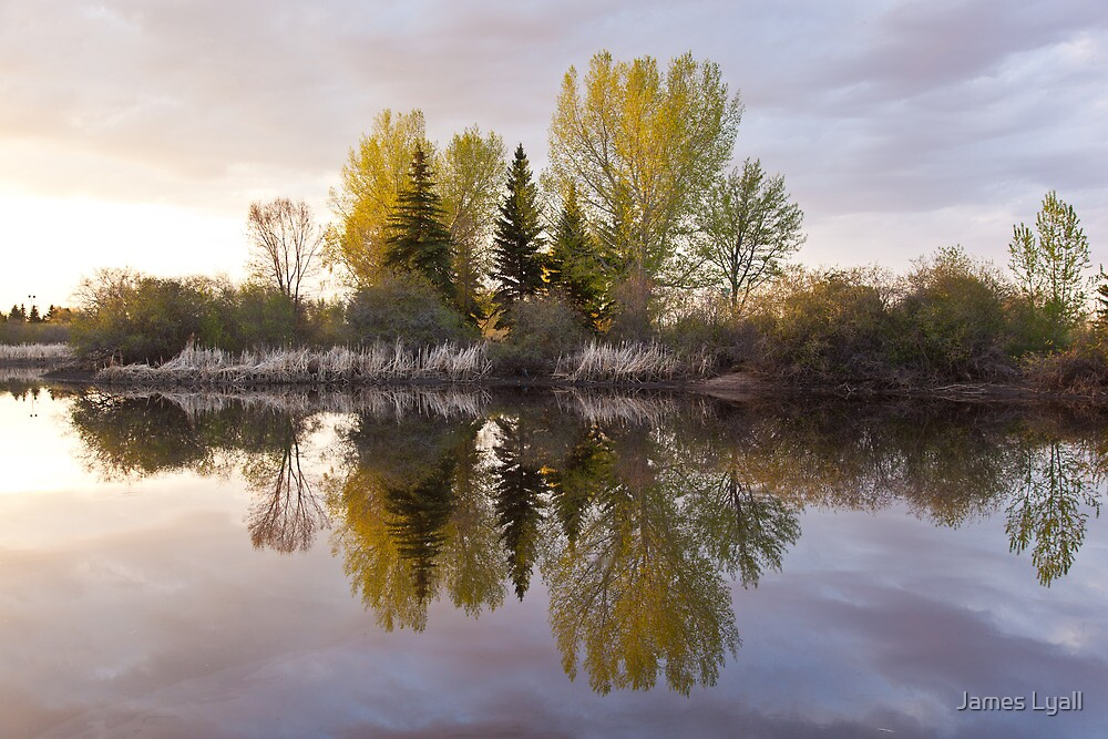 Stillness by James Lyall