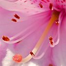Rhododendron Macro by Leon Heyns