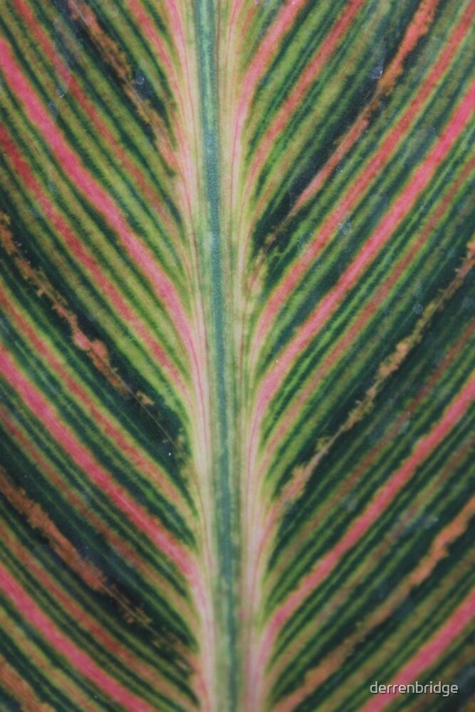 Rianbow Leaf by derrenbridge