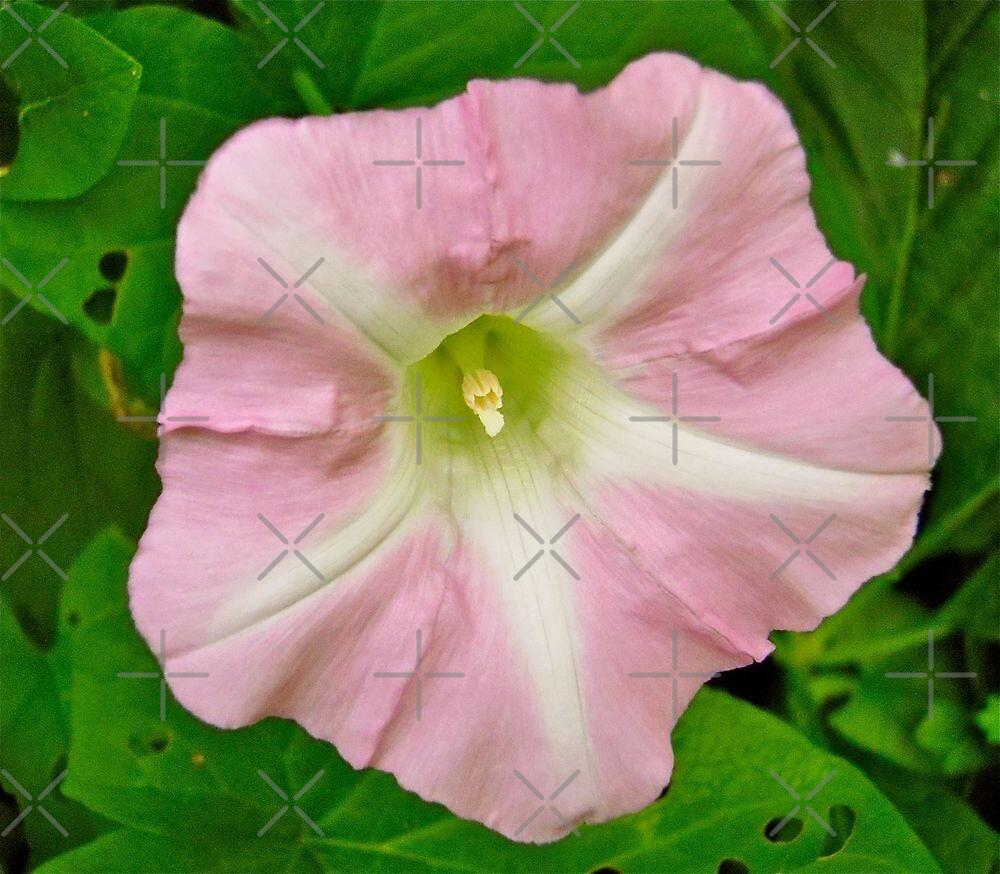 Wild pink flower by Shulie1