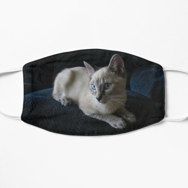 Siamese Cat with blue eyes on a blue background Mask