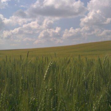 Wheat Field No. 2 by TMcVey