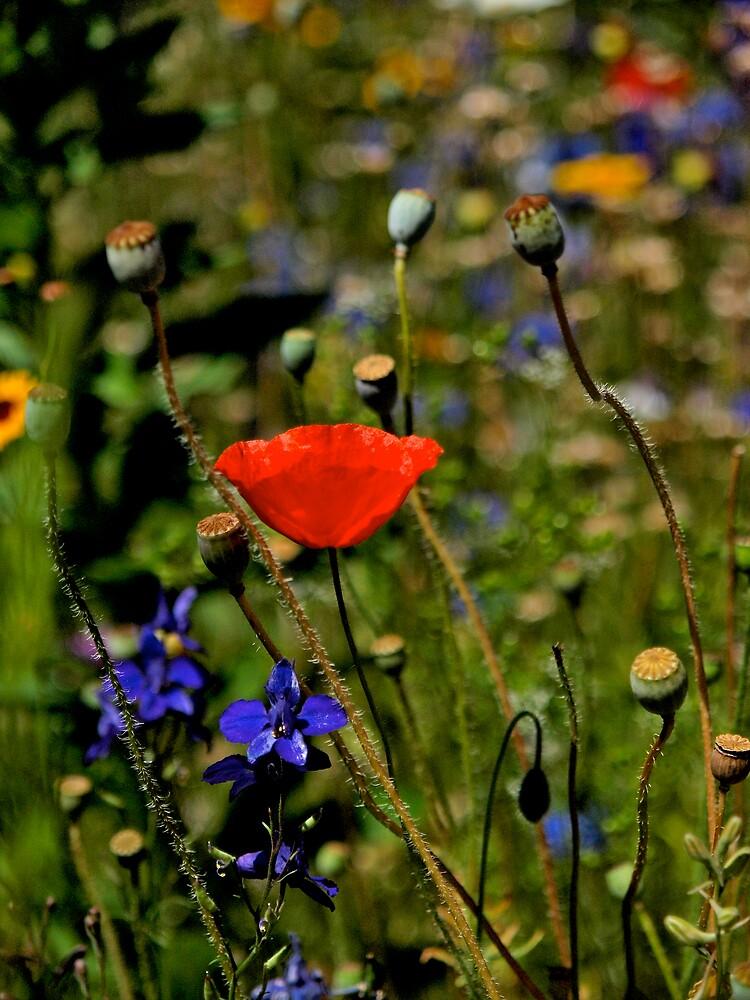 Sparkling Garden by kelleygirl