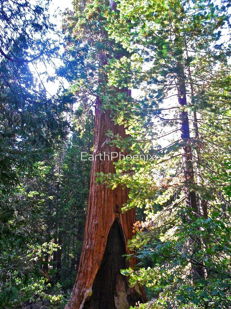 General Grant Tree by EarthPhoenix