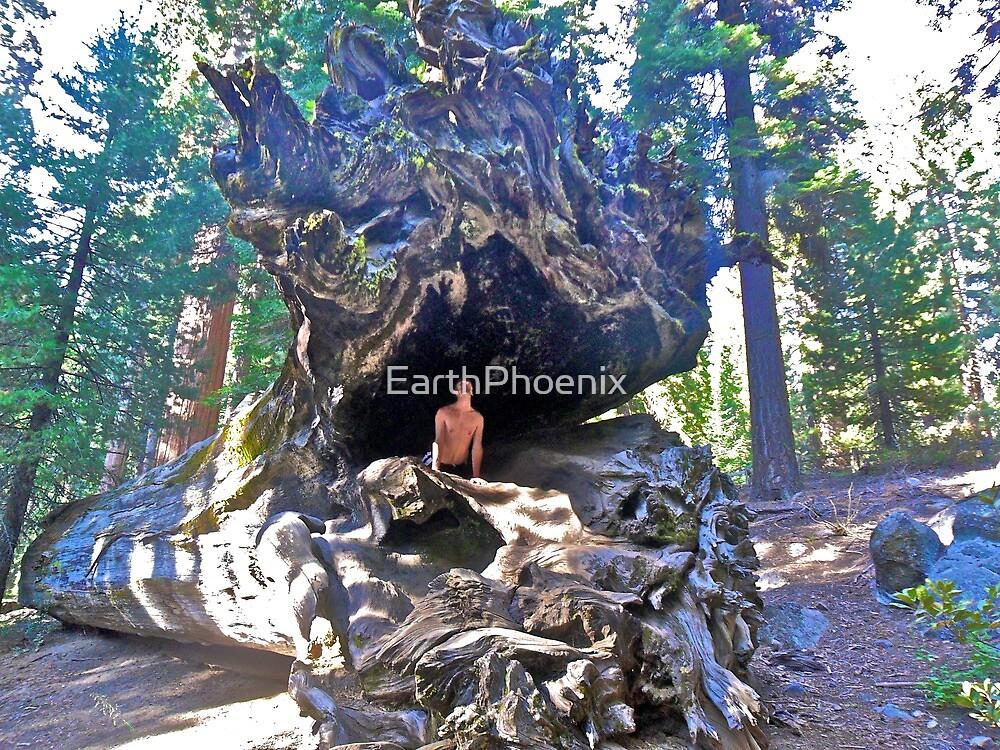 Mystic Cobra in Sequoia N.P. by EarthPhoenix