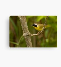 Uncommon Yellowthroat Canvas Print