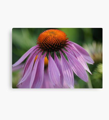 Purple Cornflower Canvas Print