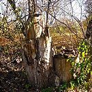 Old Tree Stumps by Shulie1