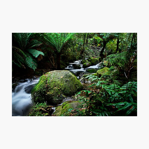 Floor Of The Forest Photographic Print