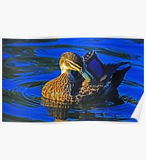 Duck in blue Poster