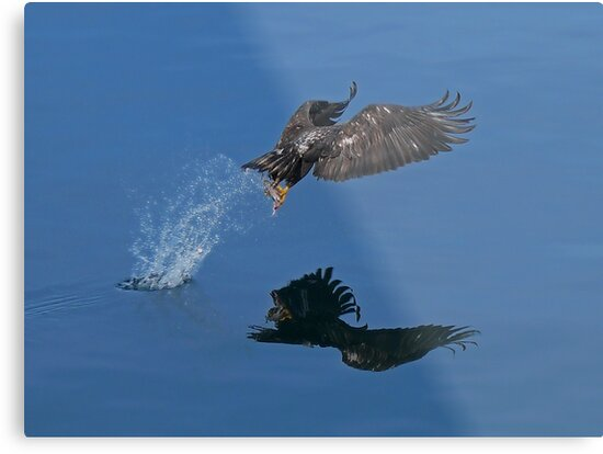 On Eagle's Wings by Gail Bridger