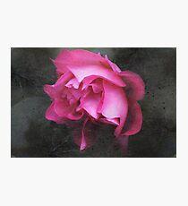 Grunge Blush Photographic Print