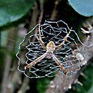 Web Day.... by mariatheresa