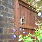 Spider web by HeatWave