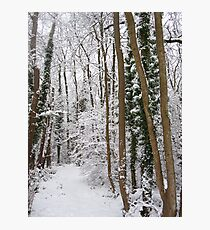 Narnia... Photographic Print