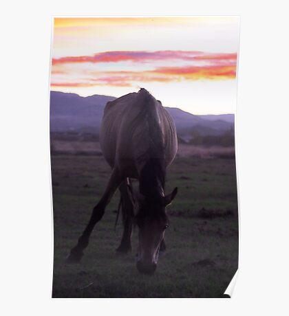 Wild Horse Sunset Poster