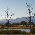 On the Way to Narrabri by Werner Padarin